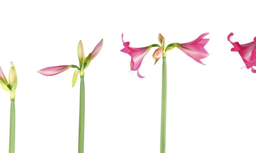 Time Lapsing Flowers