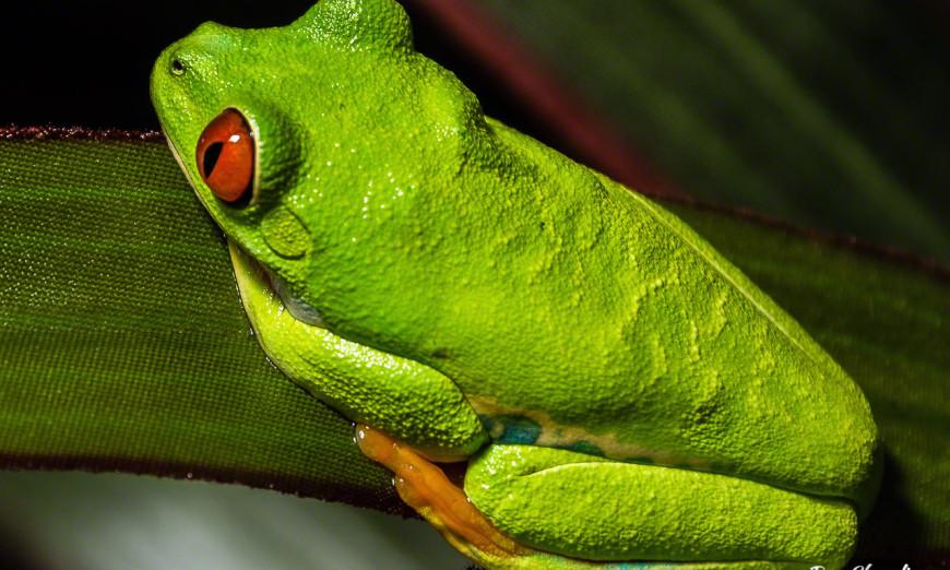 Take close-up photos at a zoo