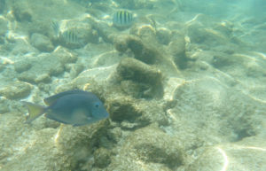 Underwater Image Shot with an Olympus Tracker Digital Camera