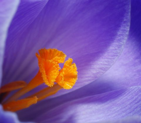 3 Simple Tools for Better Macro and Close-Up Photography