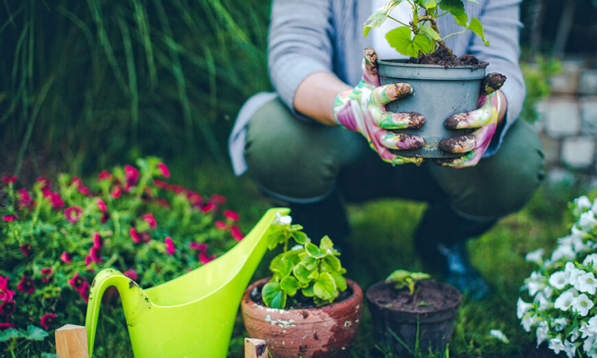 Lady holding plant in a pot in an outdoor garden