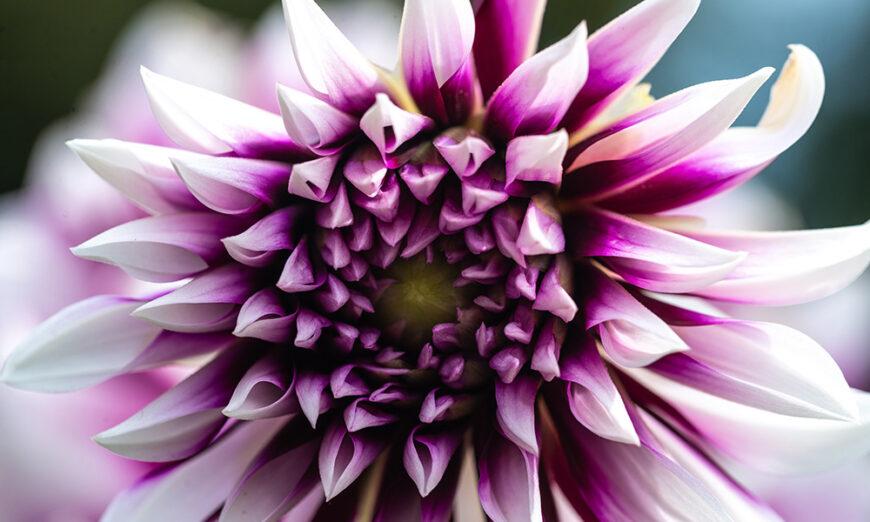 Macro - Flower