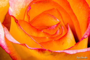 Flower Photography with Macro Lenses