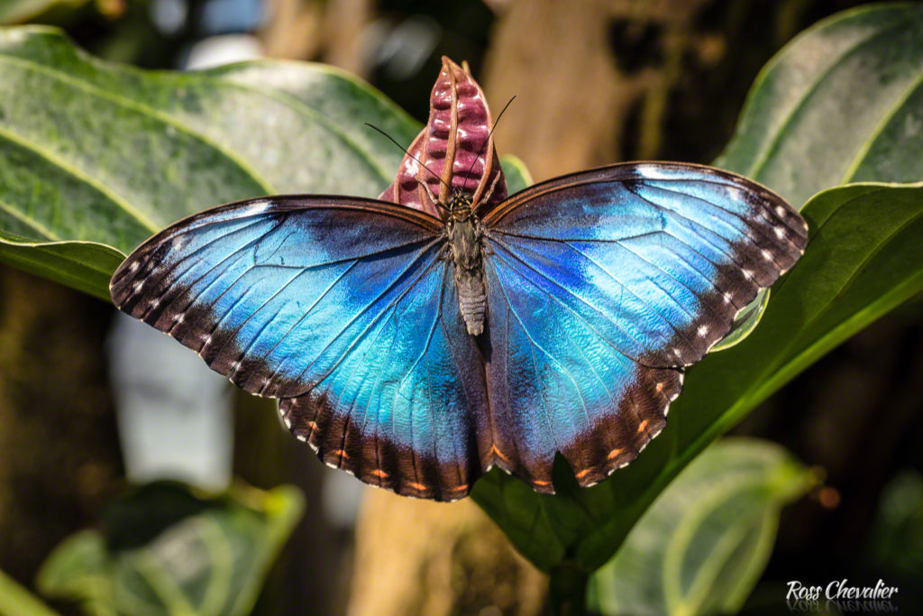 Macro Photography Lenses - Butterly