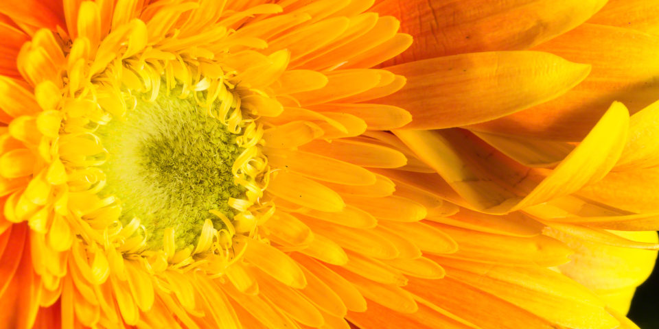 Macro Photography - Flower