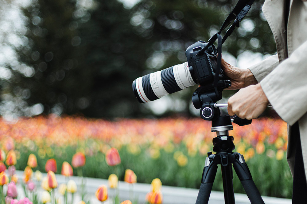 Camera, lens, and tripod setup for photographing flowers