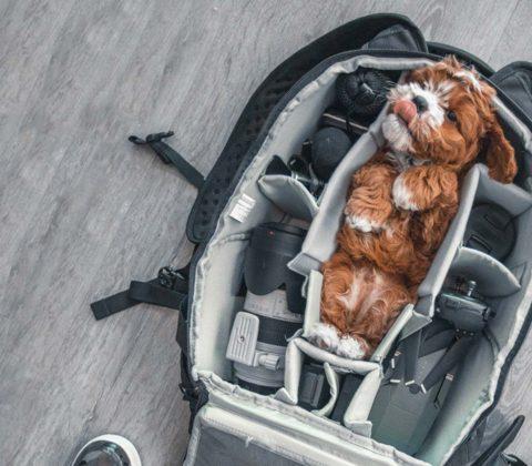 Spring Bag Essentials Feature Image