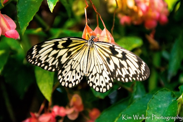 Winged Beauty by Kim Walker