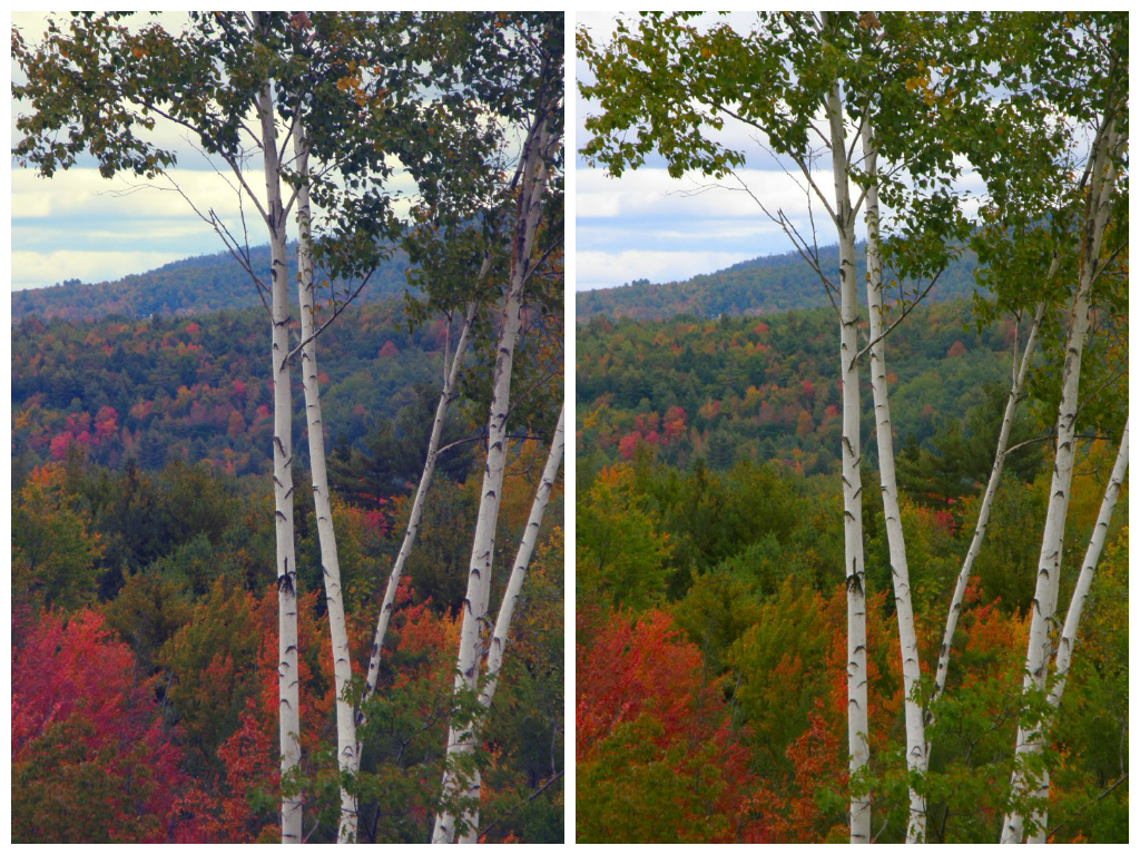 Comparison of white balance between two photos, both of trees with changing colours of leaves